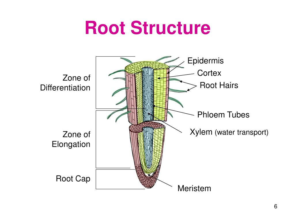 PPT - Plant Science PowerPoint Presentation, free download ...
