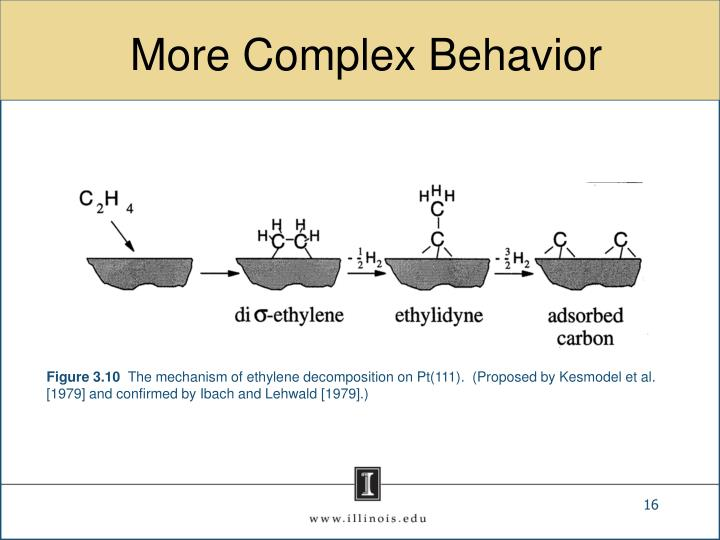 More Complex Behavior