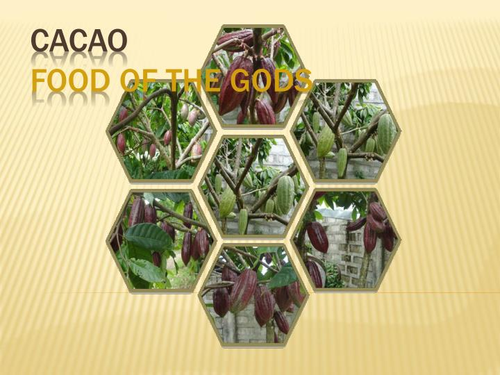 cacao food of the gods n.