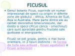 ficusul1