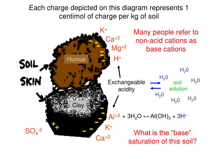 Each charge depicted on this diagram represents 1 centimol of charge per kg of soil