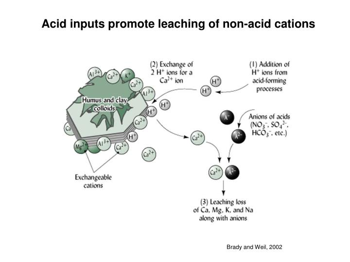 Acid inputs promote leaching of non-acid cations