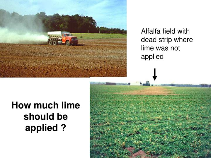 Alfalfa field with dead strip where lime was not applied