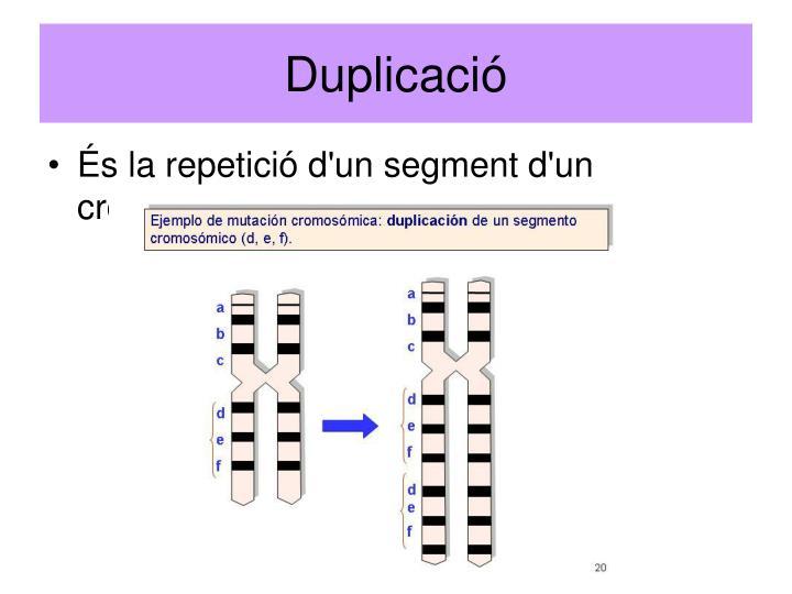 Duplicació