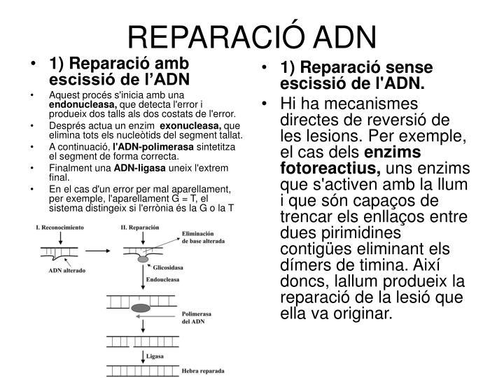 1) Reparació amb escissió de l'ADN
