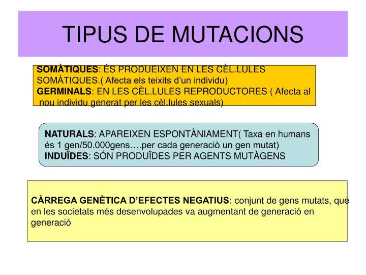 Tipus de mutacions