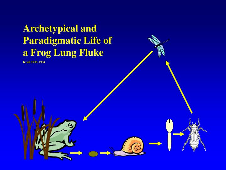 Archetypical and Paradigmatic Life of a Frog Lung Fluke