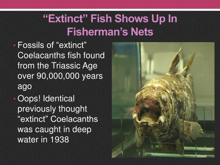 """Extinct"" Fish Shows Up In Fisherman's Nets"