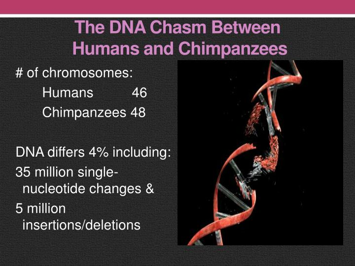 The DNA Chasm Between