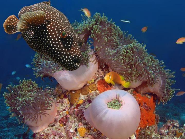 Bajo el mar