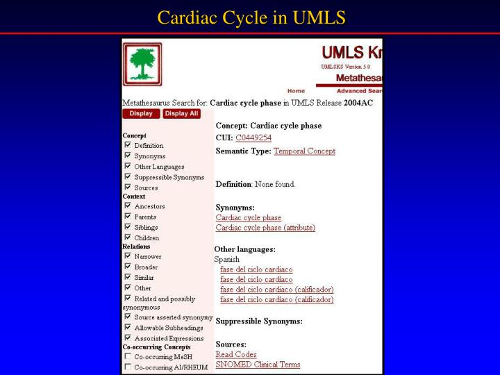 Cardiac Cycle in UMLS
