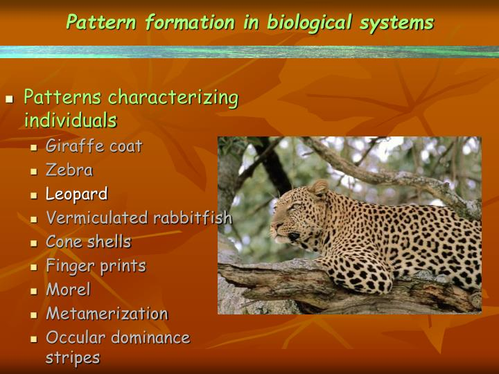 Pattern formation in biological systems