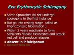 exo erythrocytic schizogony