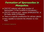 formation of sporozoites in mosquitos