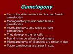 gametogony