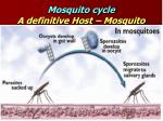 mosquito cycle a definitive host mosquito