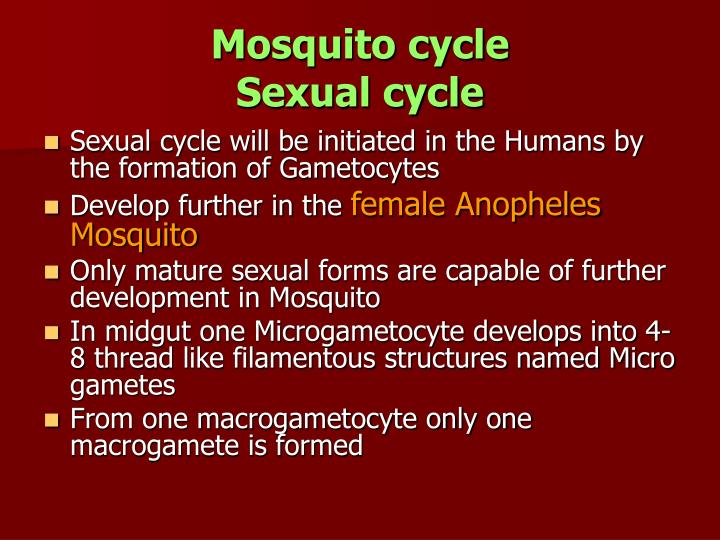 Mosquito cycle