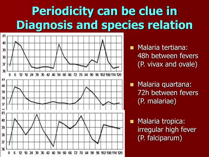 Periodicity can be clue in Diagnosis and species relation