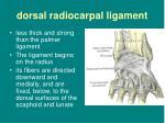 dorsal radiocarpal ligament