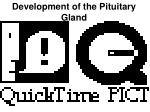 development of the pituitary gland