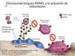 denosumab bloquea rankl y la activaci n de osteoclastos