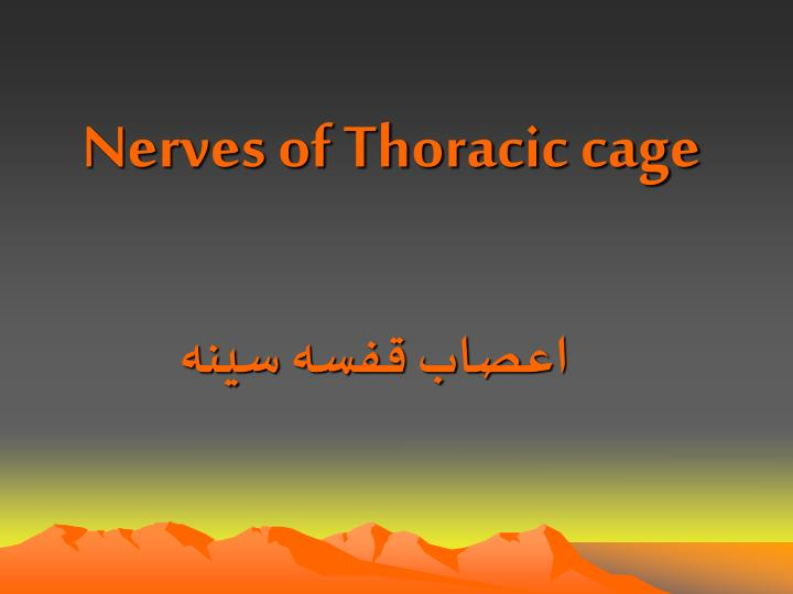 nerves of thoracic cage n.