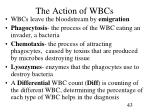the action of wbcs
