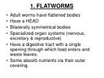 1 flatworms