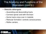 the anatomy and functions of the brainstem cont d