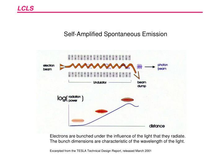 Self-Amplified Spontaneous Emission