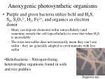 anoxygenic photosynthetic organisms