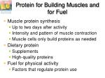 protein for building muscles and for fuel