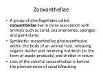 zooxanthellae