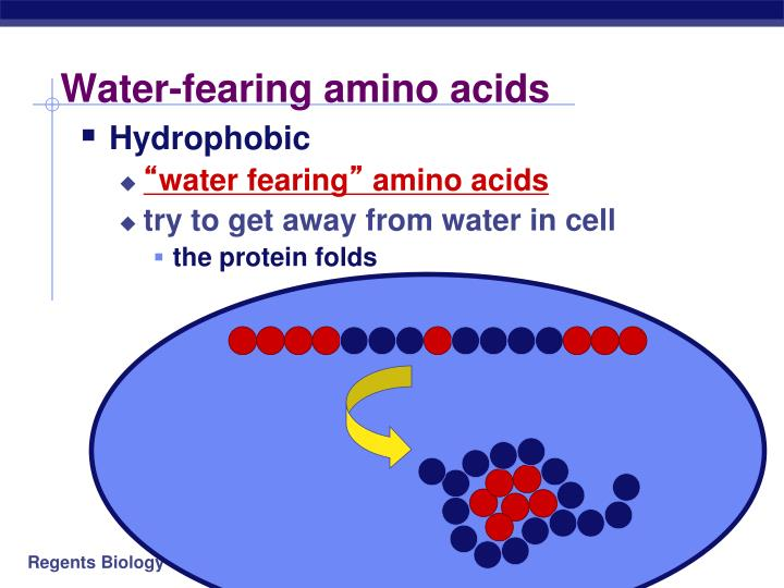 Water-fearing amino acids