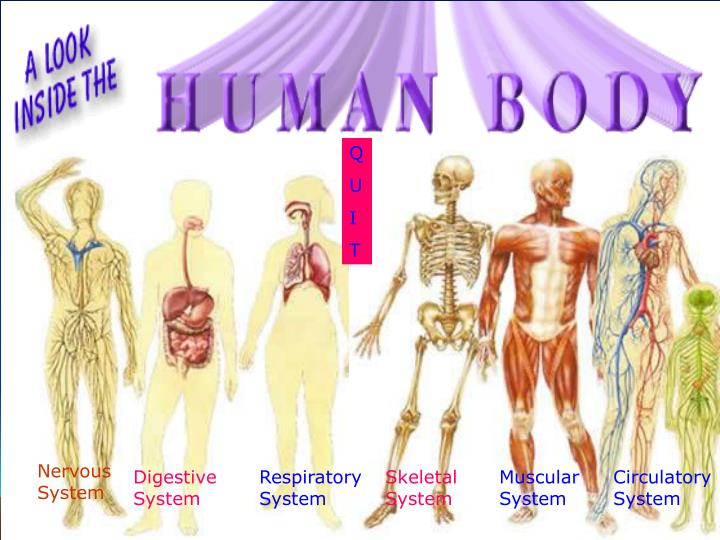 PPT Digestive System PowerPoint Presentation ID 1172416