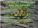 le danger du serpent tigre pour les hommes
