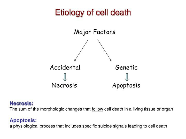 the study of cell death I couldn't agree more with your editorial on death and dying 1 however, you did fail to observe two important reasons why the process of dying is not studied more often: first, it is an infrequent event in humans, although one could claim it just as difficult to study the events during a heart.