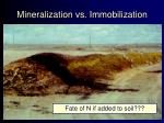 mineralization vs immobilization