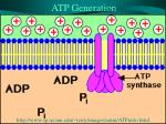 atp generation