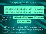 phosphate bond energy