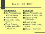 tale of two plants