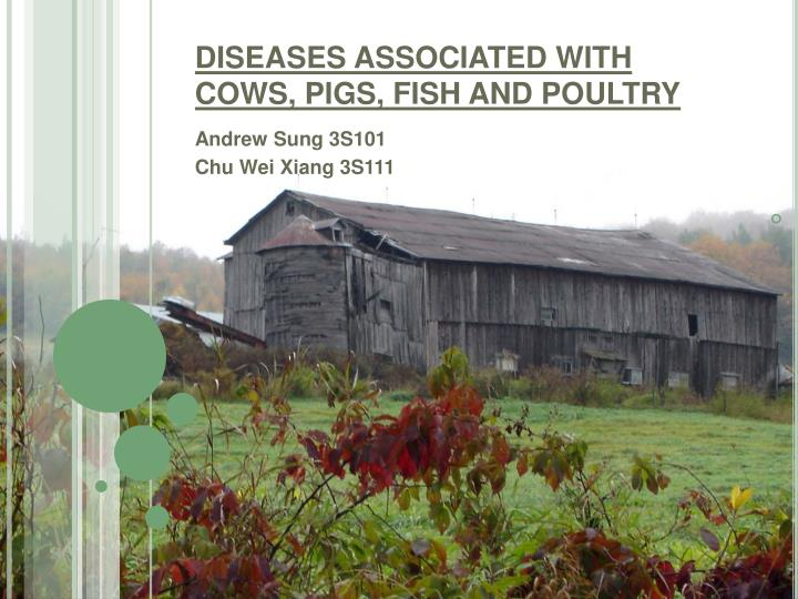 diseases associated with cows pigs fish and poultry n.