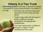 history in a tree trunk