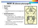 nerf ix glosso pharyngien