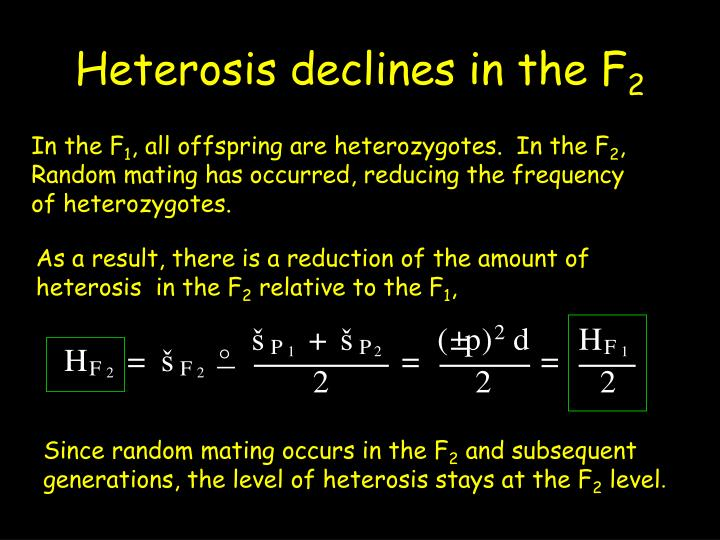 Heterosis declines in the F