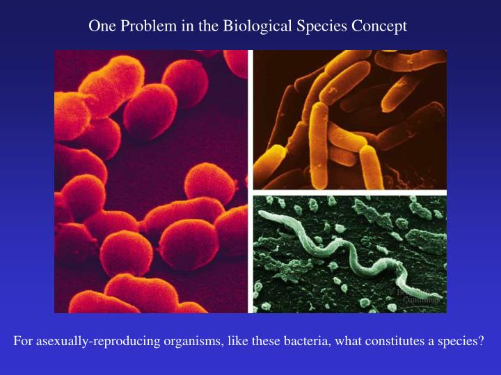 the biological species concept