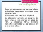 estructura de los capilares
