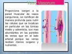vaso vasorum