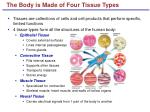 the body is made of four tissue types