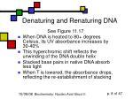 denaturing and renaturing dna